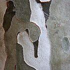 Figures in Bark by Haydee  Yordan