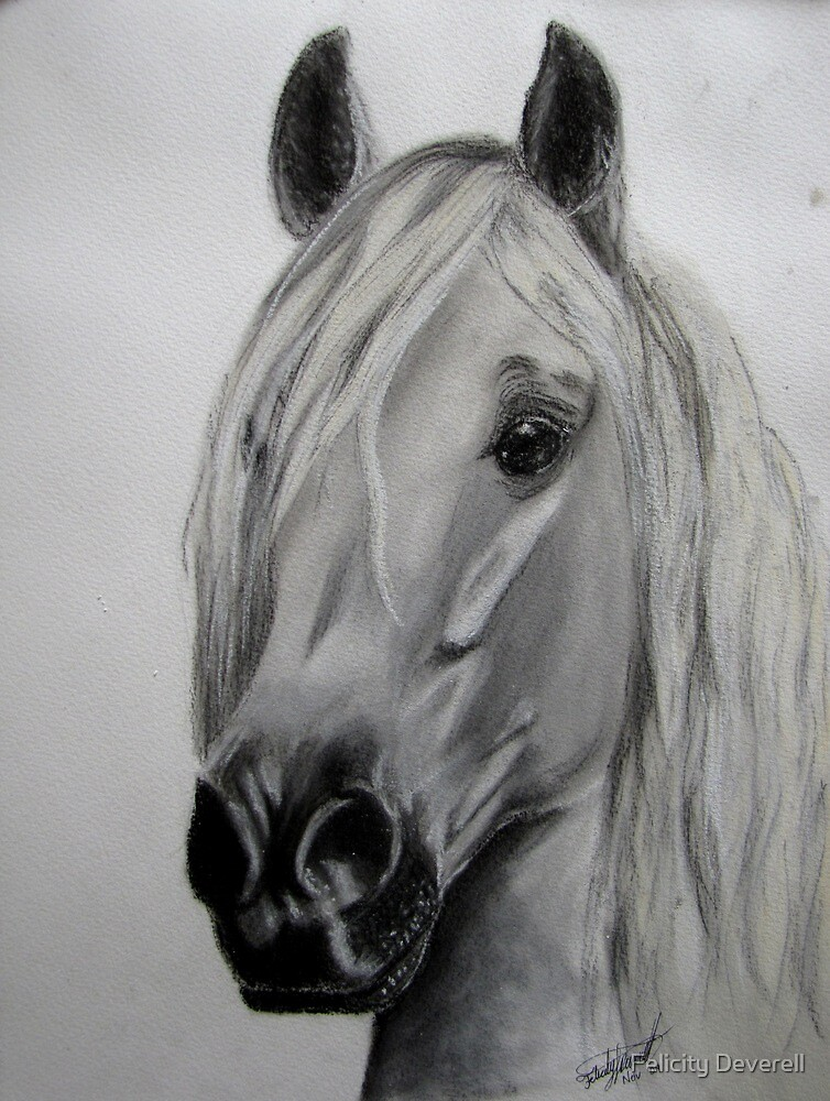 The Lusitano by Felicity Deverell