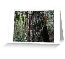 Cedar in rain forest Greeting Card