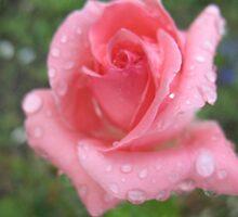 Nectarine Pink Rose by MarianBendeth