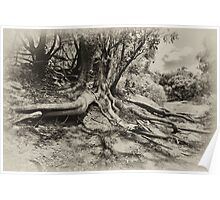Tree in the Blackwood Poster