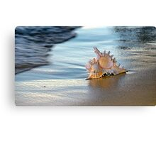 Shell #1 Canvas Print