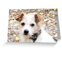 Decker Dog Greeting Card