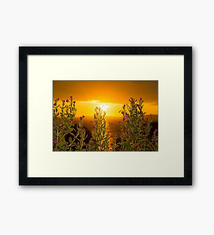 wild flowers coastal sunset Framed Print