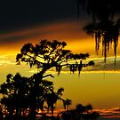Florida sunset by David Lee Thompson