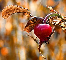 Autumn Rosehip by DeerPhotoArts