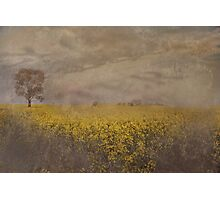 Canola On The Lachlan Photographic Print
