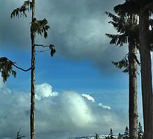 Trees and Sky by Jann Ashworth