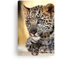 Snow Leopard Kitten Canvas Print