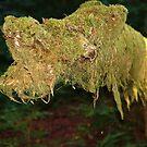 Mossy Dog by Jann Ashworth