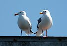 seagull buddies by tego53