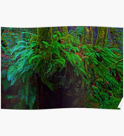 """""""Where the wild fern grows"""" in Snoqualmie Eden Poster"""