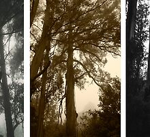 Misty trees at Sassafrass triptych by Elana Bailey