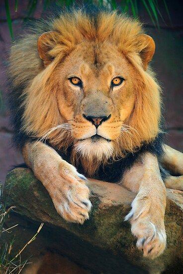 King by Anton Gorlin