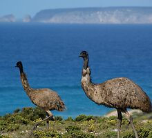 Wandering Emus Lincoln National Park by wilderness