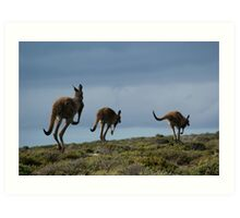 Powerful Kangaroos Bound Through The Wilderness Art Print