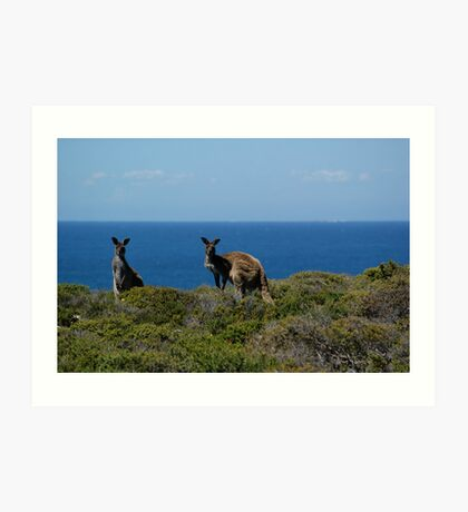 Curious Kangaroos  Art Print