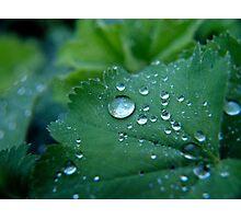 Dew drops Photographic Print