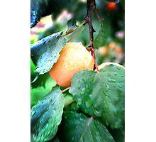 Summer Rain Photographic Print