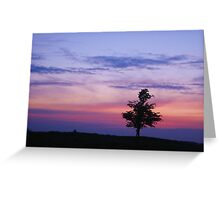 Tree caught in a sunset Greeting Card