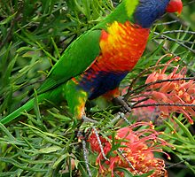 Rainbow Lorikeet by TheGreatContini