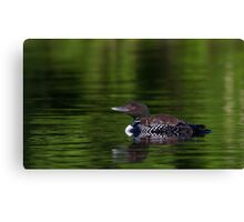 Catching the Red-eye - Common loons Canvas Print
