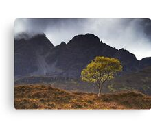 The Wee Tree Canvas Print