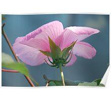 Beautiful Hibiscus 2 Poster