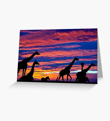 zebra and giraffes resting in the sunset Greeting Card