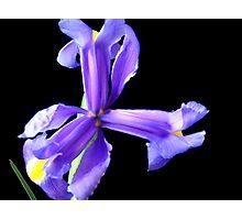 Wonderful flower. Photographic Print