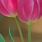 Pink Tulips by Paul Thompson