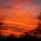 Fire In The Sky by Linda Miller Gesualdo