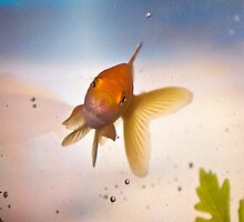 Fish by Ben Rees