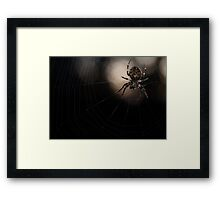 Were have all the flys gone ? Framed Print