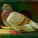 Alive Pigeon by mrfriendly