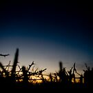 Sunset over a Hedge by Alice Oates