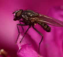Fly Macro by DPBlunt
