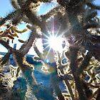 Cholla Cactus - Joshua Tree, CA by SebastianPhoto