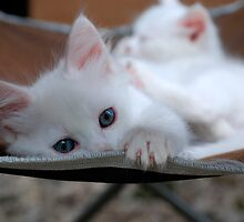 White Cats & Kittens by jojobob