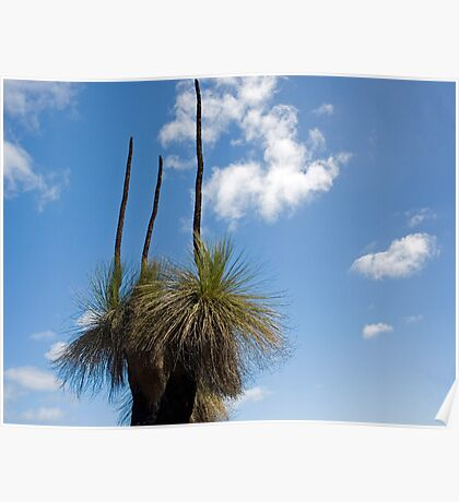 Australian Native Grass Tree Poster