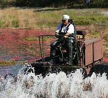 Cranberry Harvest 4 by scottnj61