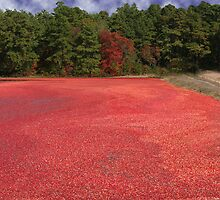 Cranberry Harvest 5 by scottnj61