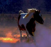 Enchanted Paint Horse  by Jeanne  Nations