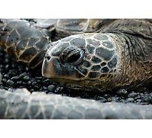 Hawksbill Sea Turtle 2 - Kona, HI Photographic Print