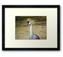 Crane.  Framed Print