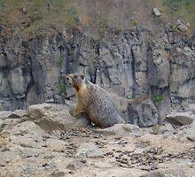 One Marmot by wrsllc