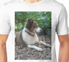 This is Buddy...who came to stay T-Shirt