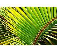 Tropical Palm Leafs Photographic Print