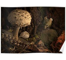 Fungi, Feather , Mouse and Moth Poster