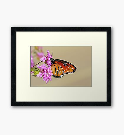 Monarch Mimic Framed Print